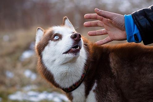 Dog Stranger Danger | Stranger Aggression