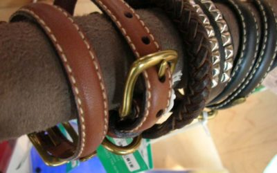 What Dog Training Collar is Best?