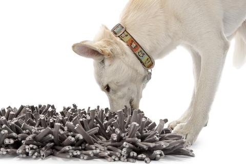 dog eating on snuffle mat