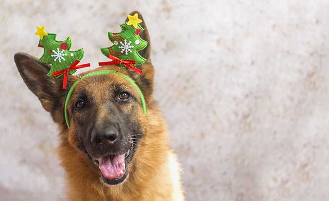 10 Ways to Help Your Dog Have a Merry Christmas! (Or Hanukkah, Yule, Solstice!)
