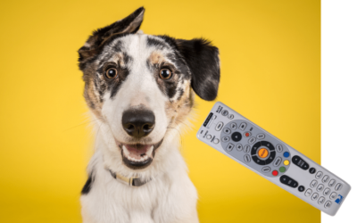 Everyone wants a remote control for their dog