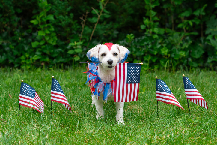 9 ways to help your dog get through the 4th of July