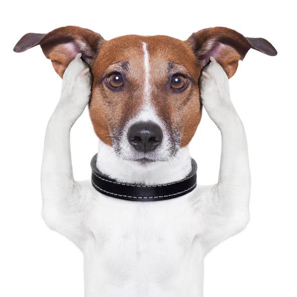 why won't my dog listen